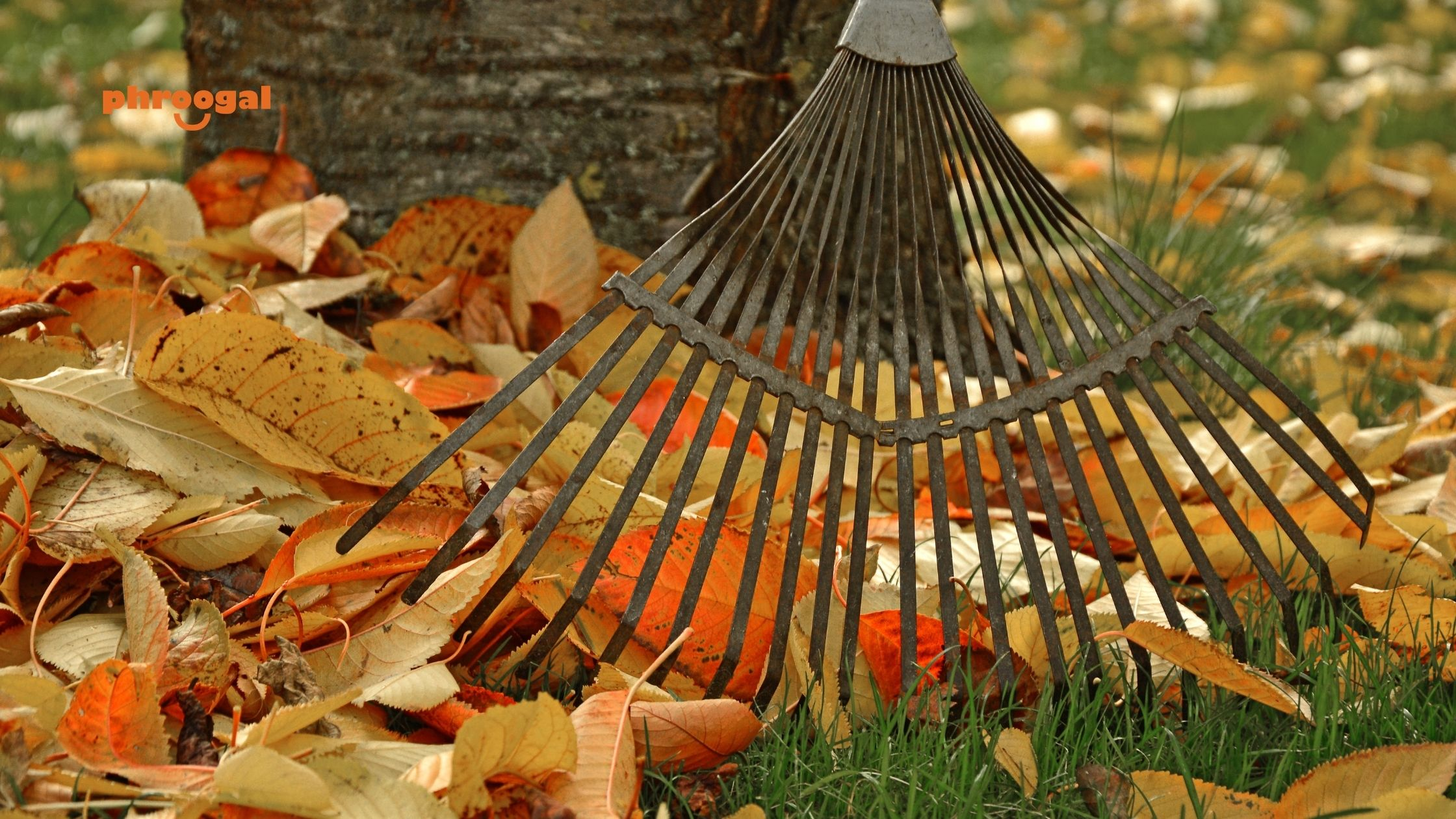 How to make money with yard work and cleanups