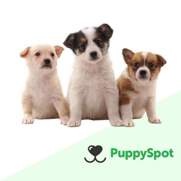 PuppySpot Review